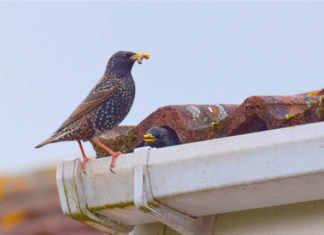 Is Your Rental Housing A Target For Unwanted Bird Nests?