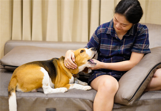 Ultimate guide to assistance animals in rental housing