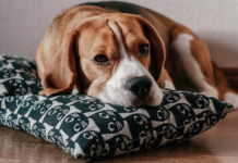 HUD Charges Apartments with Discrimination Against Tenants Who Need Emotional Support Animals