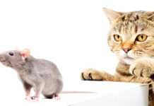 9 Ways to Get Rid of Mice in Rental Properties
