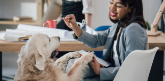 The Benefits of Being Pet-Friendly For Rental Property Owners