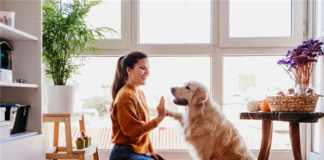 The New American Dream Is A Dog-Friendly Home