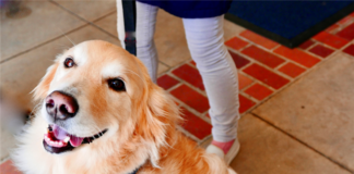 Ask Landlord Hank If A Tenant Dies, Does His Emotional Support Dog Become A Pet?