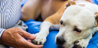HUD Charges Landlord Who Evicted Tenant Over Assistance Animal